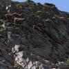 ungewöhnliche Bergbewohner